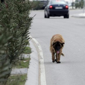 Ciudadanos propone crear un registro de maltratadores de animales y velar por los animales abandonados