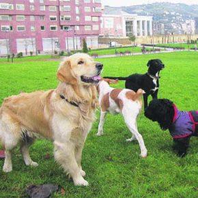 Barbastro aprueba elaborar una ordenanza municipal sobre la protección, control y la tenencia responsable de animales de compañía