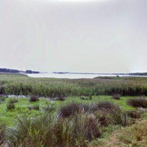 Ciudadanos (Cs) Alcañiz pide modificar las rejillas de la presa de La Estanca para que los peces no puedan atravesarlas