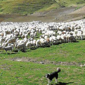 """Ciudadanos pide """"medidas concretas y eficaces"""" para salvaguardar y proteger la ganadería extensiva de Huesca ante la presencia del lobo"""