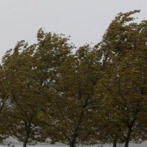 """Ciudadanos solicita un estudio sobre el estado del arbolado de Utebo """"para estar prevenidos ante posibles tormentas y rachas de viento"""""""