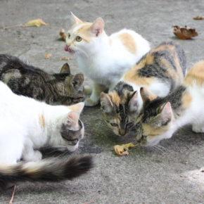 """Ciudadanos Andorra reclama que no se fomente la existencia de gatos asilvestrados """"en beneficio de la salud pública"""""""