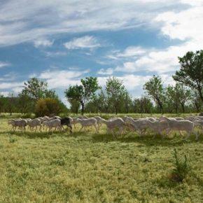 Cs Ejea llama a defender la ganadería extensiva de ovino, caprino y vacuno con medidas medioambientales y ayudas