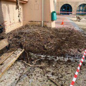 El Ayuntamiento de Sariñena traslada varios nidos de cigüeñas por su peligrosidad