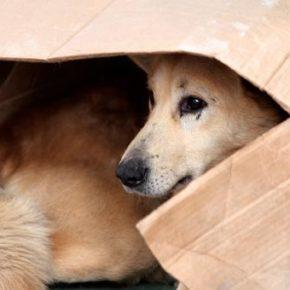 Cs Valdejalón pide medidas para solucionar el problema de los perros vagabundos en los municipio