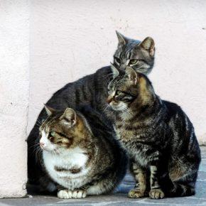 Cs pide al Ayuntamiento de Morata de Jalón medidas para el control de las colonias felinas en la localidad