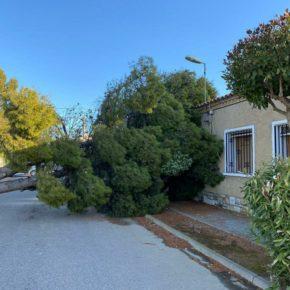Ciudadanos denuncia la falta de mantenimiento de los parques y jardines de Alberuela de Tubo