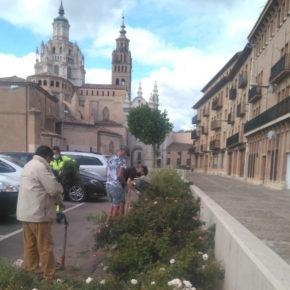 Cáritas Diocesana de Tarazona imparte un curso de instalación y mantenimiento de jardinería y zonas verdes